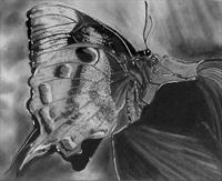 Donna Gross - The Butterfly Garden